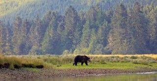 viatge_a_park_ossos_grizzly