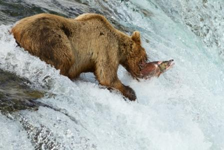 WEB-alaska-fishing-salmon-223942069