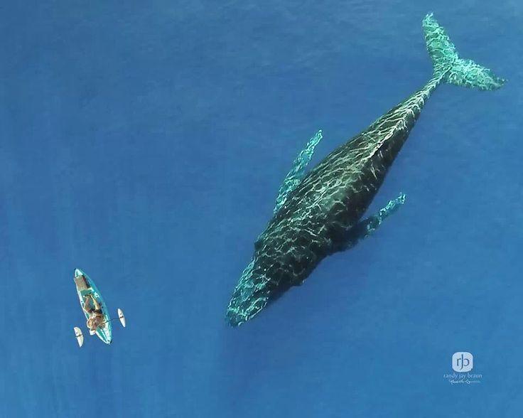 kayak con ballenas en todoussac