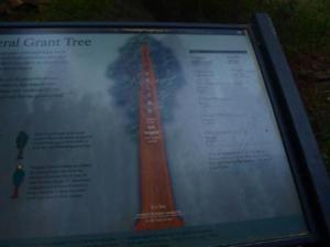 General Grant Tree: Datos
