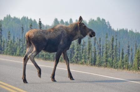 WEB Denali national park, Alaska_122636668 (FILEminimizer)