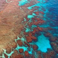 Great Barrier Reef AUS