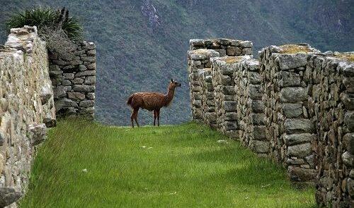 Machu-Picchu a