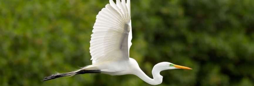 Madre de Dios Aves -PE