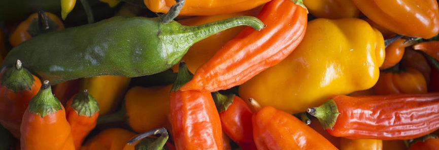Peru Pepper