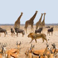 VIAJE NAMIBIA 9 DÍAS
