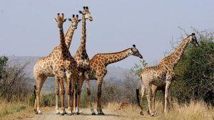 RUTA SUDAFRICA 15 DIAS