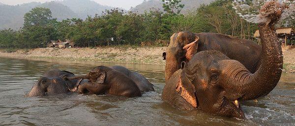 ELEPHANT PARK 1