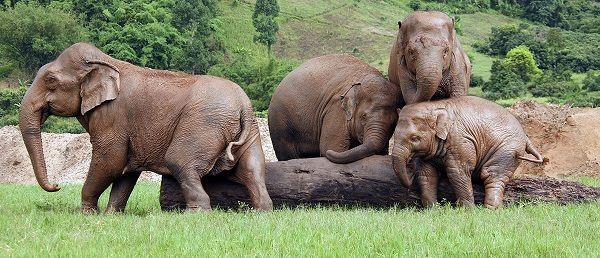 ELEPHANT PARK 2