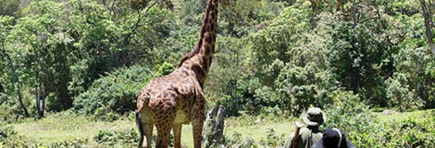 VIAJE LA ESENCIA DE KENIA EN 5 DIAS